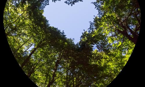 1-sostenibilidad-bioindustria-bosque